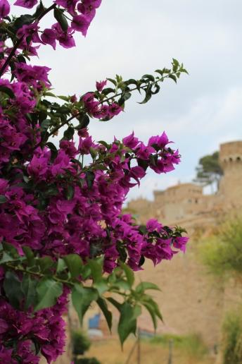 Ein Meer aus violetten Blättern, ein Meer aus Phantasie und Träumen