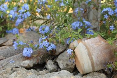 Zerbrochener Ton aus dem sich kleine, blaue Blumen emporkämpfen mit dem Versprechen, dass aus jeder Scherbe etwas Wundervolles entstehen kann